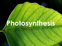 IconPhotosynthesis.png