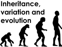 IconInheritanceVariationandEvolution.png